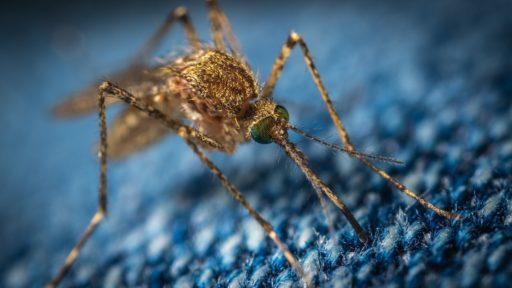Mejores repelentes de mosquitos.