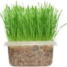 comprar hierba gatera anti mosquitos