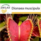 comprar atrapa moscas mosquitos insectos carnivora
