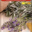 comprar mejores ofertas de semillas antimosquitos lavanda