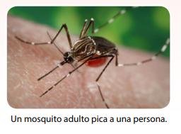 matar mosquitos adultos